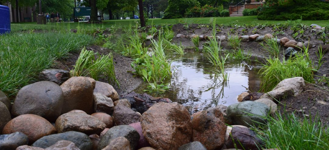 Bioswale filled with water on wayne state's campus